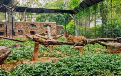 Wild Upcoming Events at the Birmingham Zoo